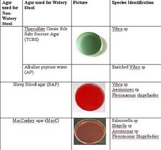 c diff stool test instructions